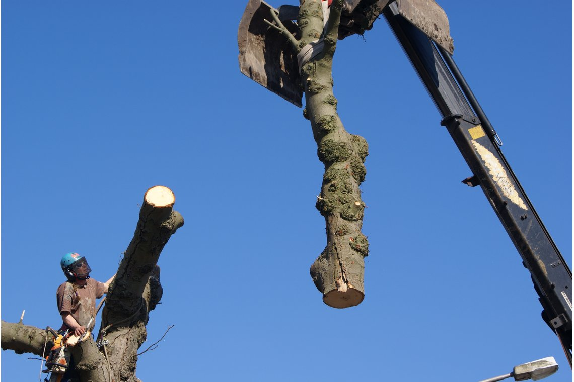 bomen zagen met nagelvijl